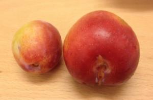 FIN FRUKT: Denne frukten er fra et tre som har fått en kraftigere beskjæring. FOTO: Elisabeth Heggland Urø