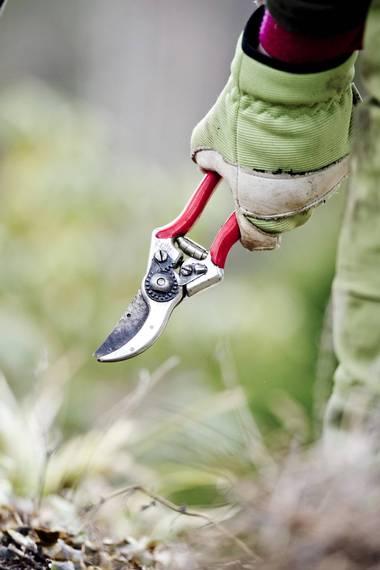 UTSTYR: En hagesaks kan gjøre våronna enklere. FOTO: Jon Olav Nesvold, NTB scanpix