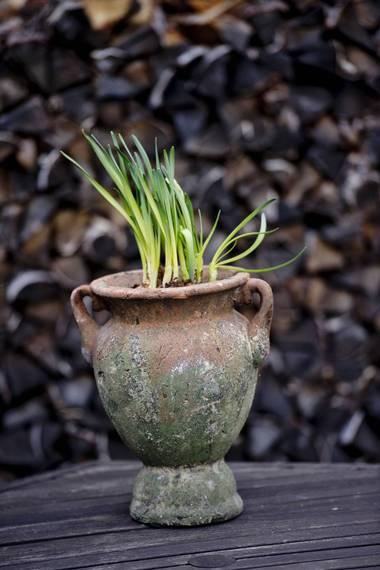 VIVA VÅR: Løkblomster kan gjøre seg godt i potte utendørs nå. Narsisser er ekstra tøffe og tåler en frostnatt godt. FOTO: Jon Olav Nesvold, NTB scanpix
