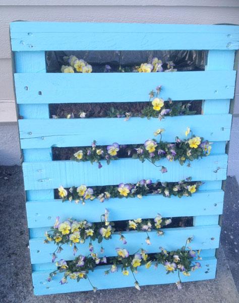 VAKKERT: Vi lagde slike blomsterbed av paller i fjor. Etter et strøk med maling, festet vi et plastdekke på baksiden og fylte dem med jord og blomster. Nesten uten noe pleie levde stemorsblomstene fra begynnelsen av juni og langt ut i oktober. FOTO: Linn Gjerstad