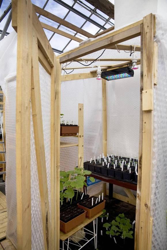 KLAR FOR SOMMER: Det er småplanter på gang, blant annet gresskar, tomat, paprika, aubergine og melon. FOTO: Karen Gjermundrød