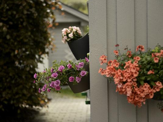 MUNTER KAR: Grønt, fint og velstelt i Hjalmar Aasheims hage på Haukeland i Arna. Han er første hageeier ut i sommerserien «Bergens fineste hage» på Bonansa på BTs nettsider. Men det hadde gjort seg med litt varmere vær etter hvert, sier 72-åringen. FOTO: Gidske Stark