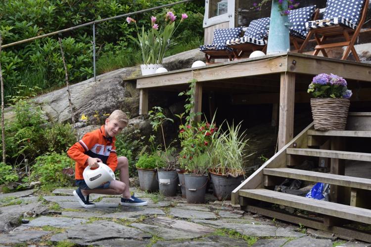 Dette må du gjøre i hagen nå   bonansa