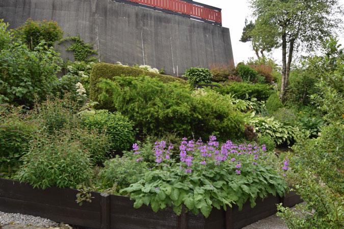 AVFALLSHAUG: Området var dekket av hageavfall og ugress, og det dekket halve muren. Nå klatrer det klatre Hortensia opp langs muren, og området er fullt med stauder og solbærbusker. FOTO: Elisabeth Heggland Urø