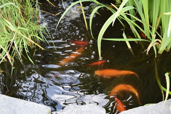 LEVENDE: En fiskedam med både iris og gullfisk.  Den har en spennende form, med fin beplantning rundt.  FOTO: Elisabeth Heggland Urø